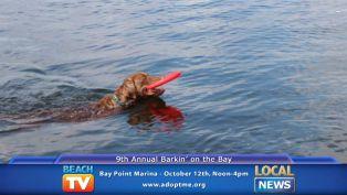 Barkin' on the Bay - Local News