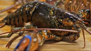 Martin's Steak & Lobster