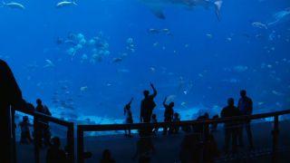 Georgia Aquarium - A Piece of...