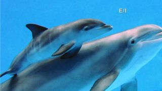 Dolphin Social Structure - Kids on...