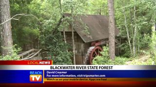 Blackwater River State Forest in...