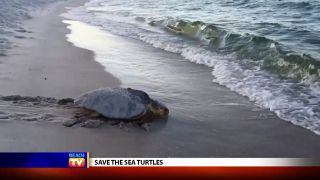 Save the Sea Turtles Leave No...