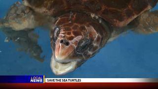 Types of Nesting Sea Turtles -...