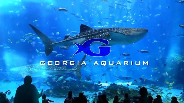 Georgia Aquarium Tripsmarter Com