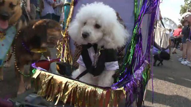 Krewe of Barkus Mardi Gras