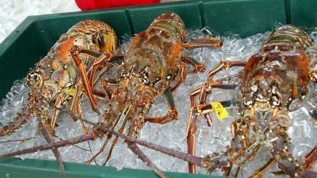 Schooners' Annual LobsterFest