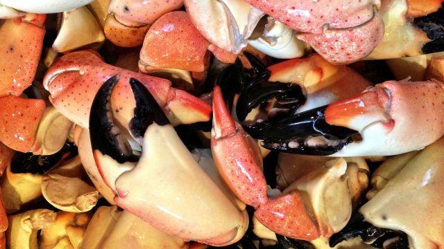 Stone Crab Season