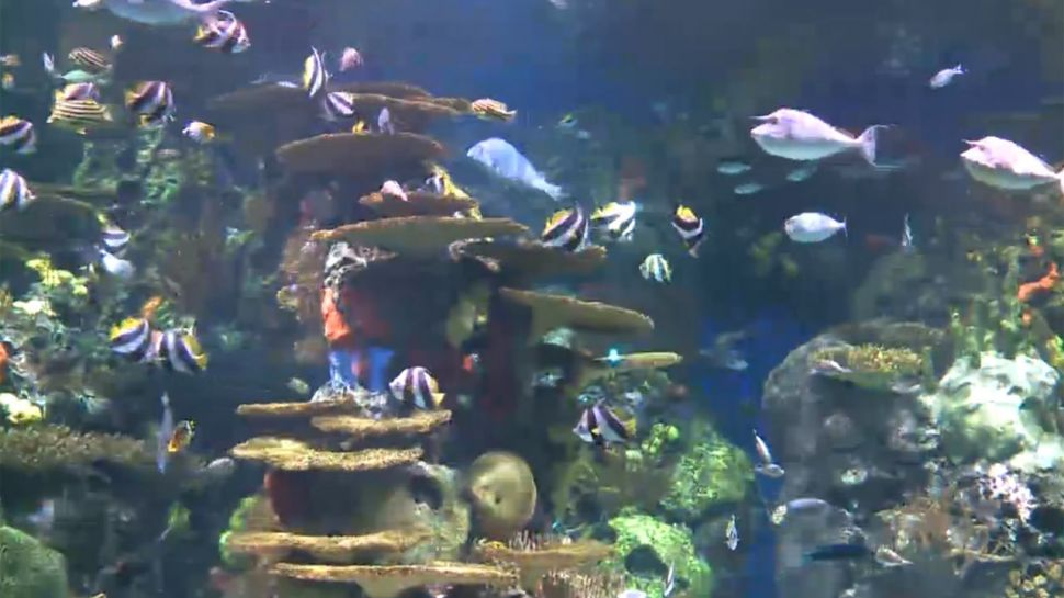Rainbow Tank at Ripley's Aquarium - Did You Know?