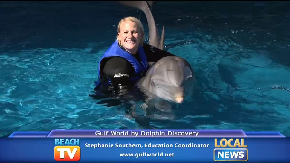 Education at Gulf World by Dolphin Discovery - Local News
