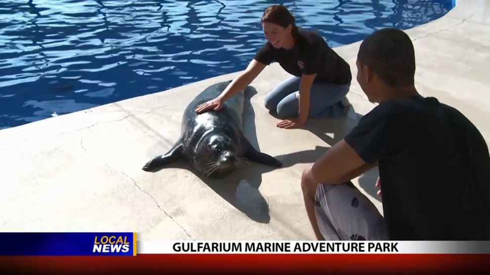 Gulfarium Marine and Adventure Park - Local News
