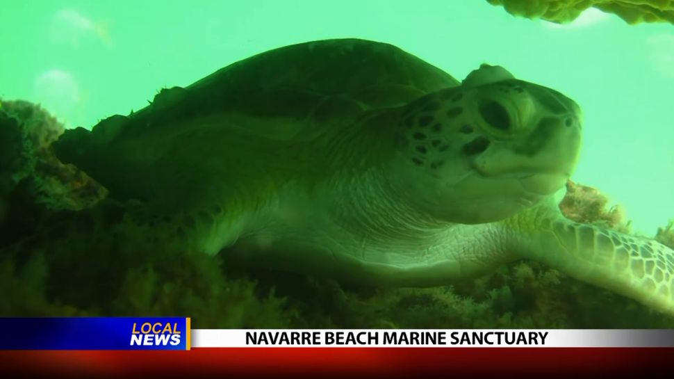 Navarre Beach Marine Sanctuary - Local News