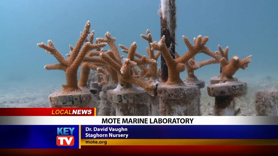 Mote Marine Laboratory - Local News