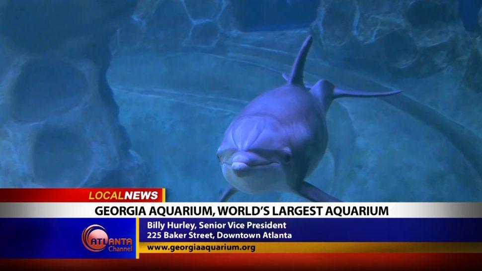 Georgia Aquarium, the World's Largest Aquarium - Local News