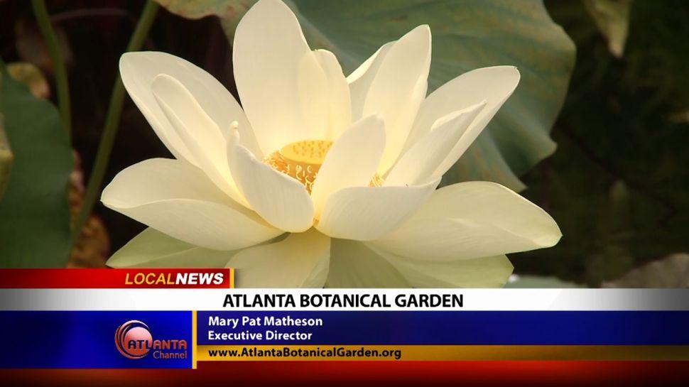 Atlanta Botanical Garden - Local News