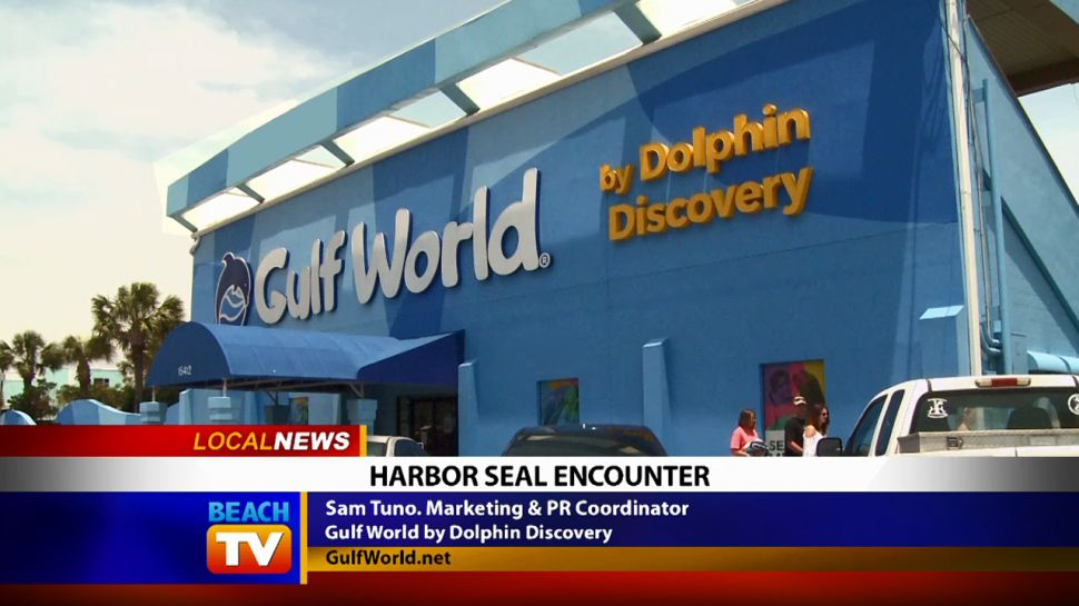 Harbor Seal Encounter at Gulf World - Local News