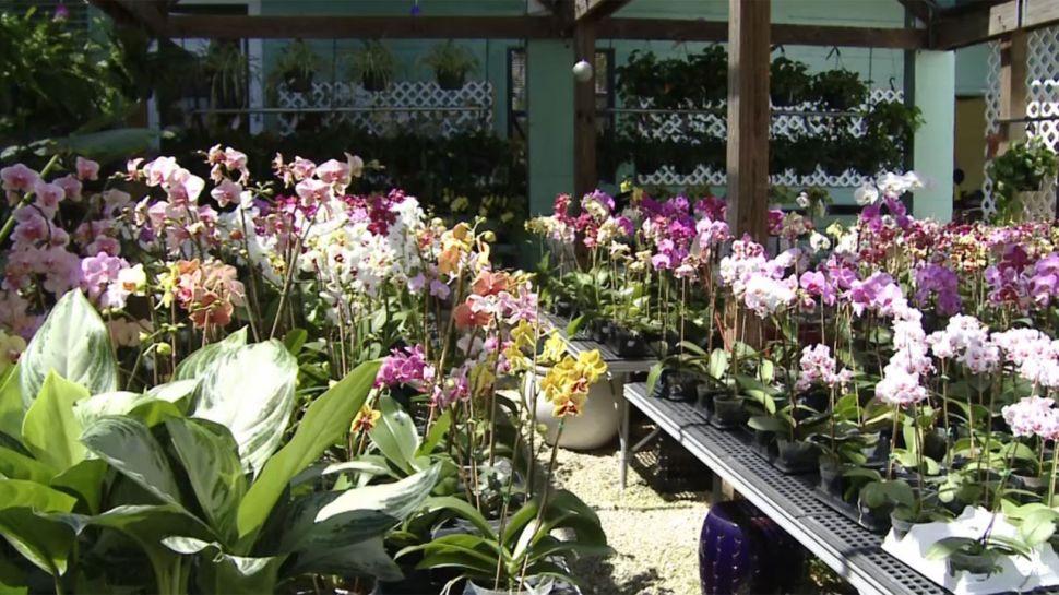 MARC House Orchids